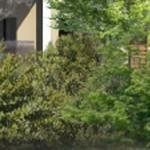 La haie bocagère- un mélange d'arbustes d'essences différentes