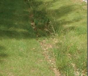 Exemple d'une zone de rétention des eaux de pluie